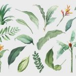 Hand drawn tropical plant parts set on a white background vector